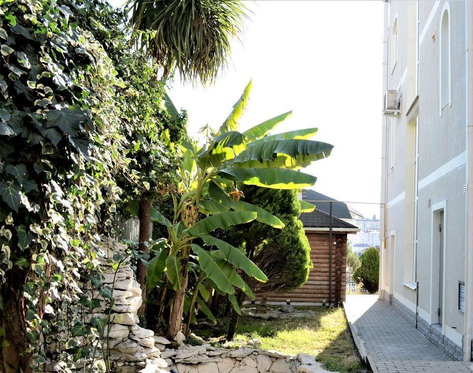 Прибыльный гостевой дом рядом с пляжем - image gotovyy-biznes-novyy-sochi-klubnichnaya-ulica-414322313-1 on http://bizneskvartal.ru